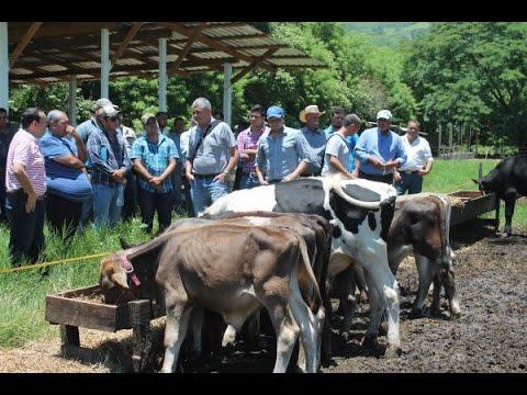 Expertos de Israel capacitan a productores de ganado de Olancho