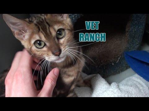 Sweet Kitten Rescued!