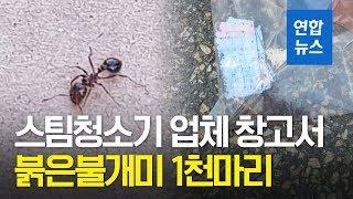 스팀청소기 업체 안산 창고서 붉은불개미 1천마리 발견 …
