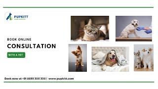 Consult A Vet Online: Online Consultation With A Vet | India | @Pupkitt Pet Care