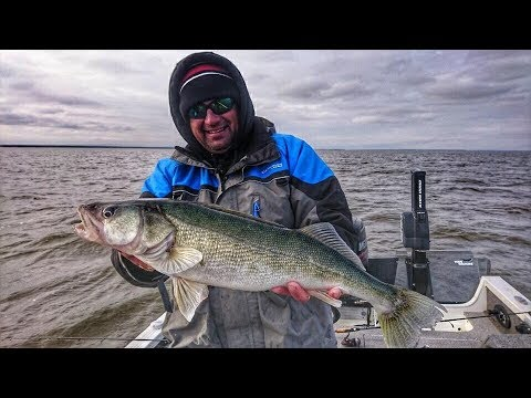 Winnipeg  River Walleye