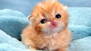 funny cute baby animal videos compilation 2014 new