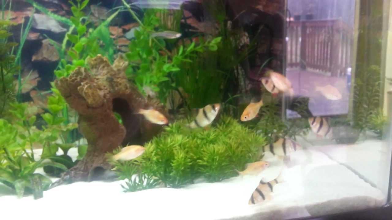 Aquarium fish tank sand - 20 Gallon Sand Bottom Freshwater Aquarium