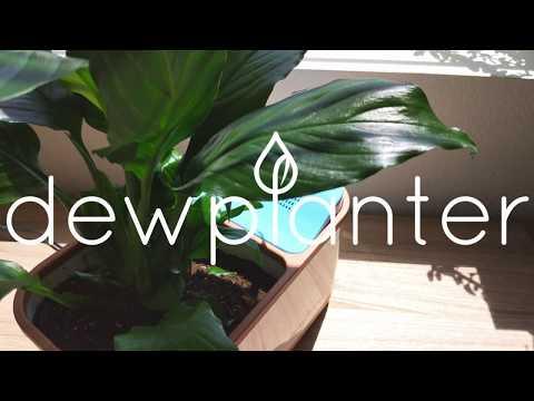 Dewplanter - The Water Generating Planter
