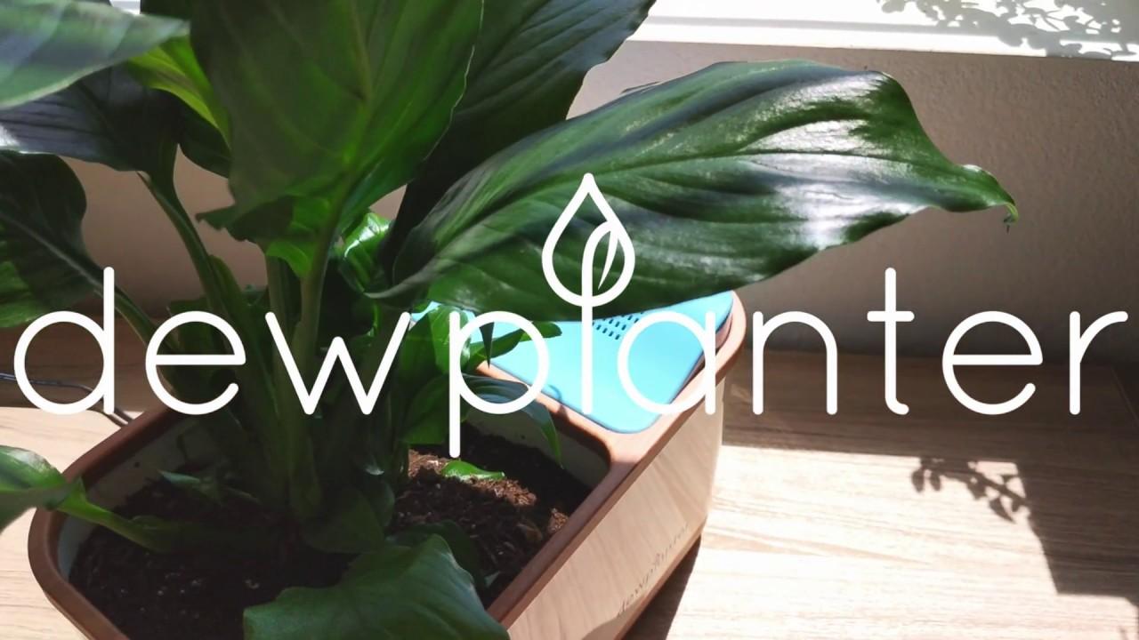 Dew Planter video thumbnail