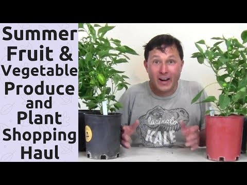 Summer Fruit and Vegetable Produce and Plant Shopping Haul