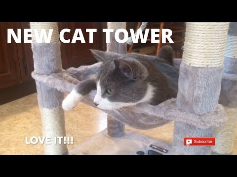 FUNNY CATS GET A NEW TOWER CONDO | Cats Playing