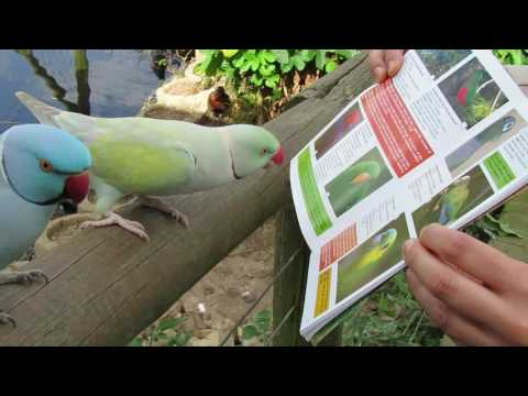 Parakeets enjoy photos of parrots