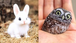 Cute baby animals Videos Compilation cute moment of the animals  Cutest Animals #12