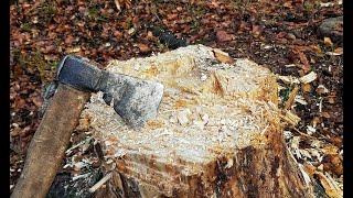 Ścinanie wielkiego drzewa siekierą