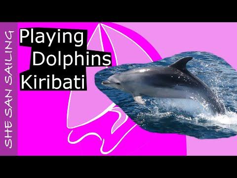 Dolphins on our way to Kiribati