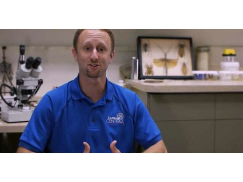 How to Find a Good Bed Bug Exterminator | Pest Control