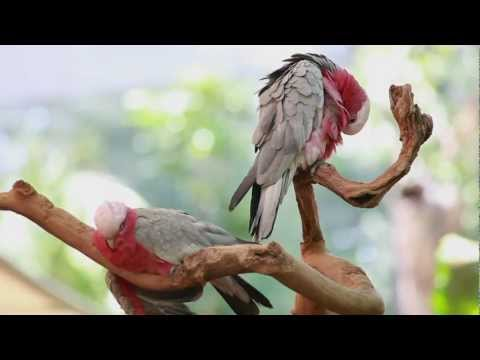 Daintree Rainforest tour