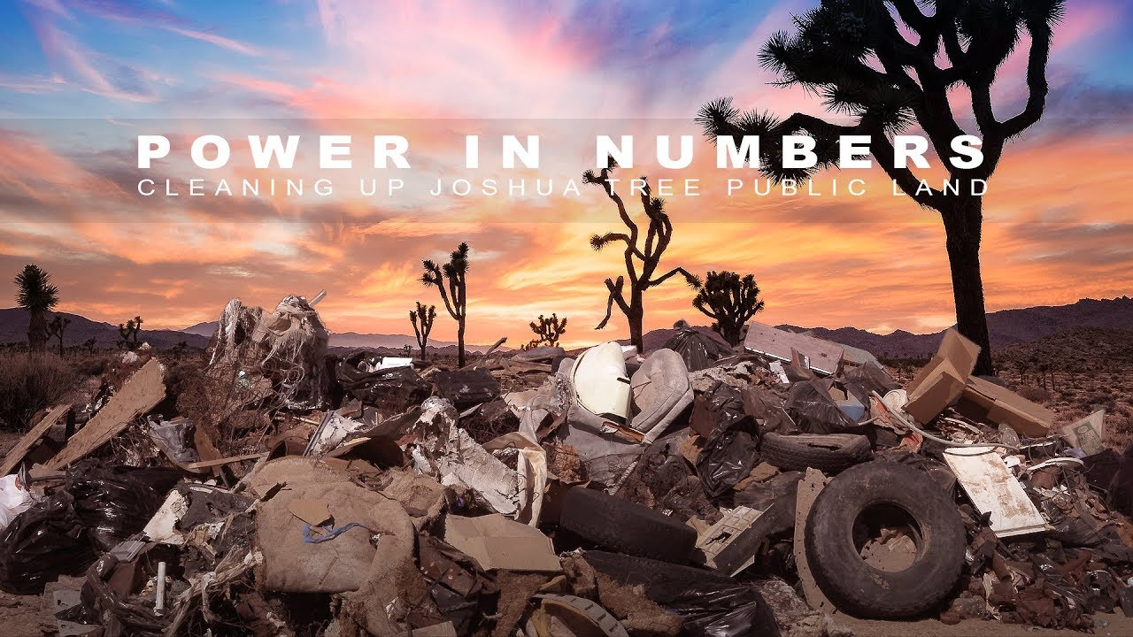 Power in Numbers - Cleaning up Joshua Tree public land