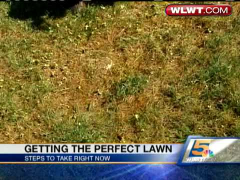 Learn How To Grow The Perfect Lawn