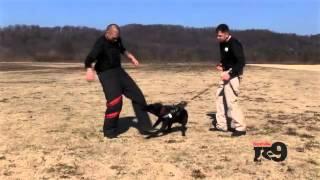 Nashville K-9: Duke - Police Dog