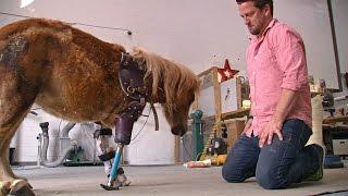 Протезы для животных: ортопед помогает пони и слонам встать на ноги (новости)