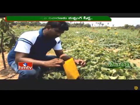 Nela Talli | East Godavari Ideal Farmers | Warangal Mirchi Speciality | Organic Farming | HMTV