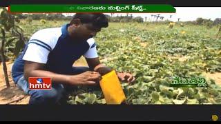 Nela Talli   East Godavari Ideal Farmers   Warangal Mirchi Speciality   Organic Farming   HMTV