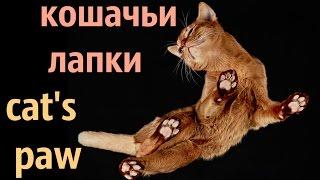 Кошачьи лапки. Cat's paw. #Кошки - это кошки ИДЕИ ДЛЯ ВДОХНОВЕНИЯ