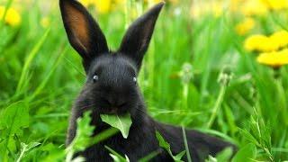 Можно ли давать кроликам листья: деревьев, ореха и других