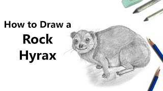 How to Draw a Rock Hyrax in Pencil [Time Lapse]