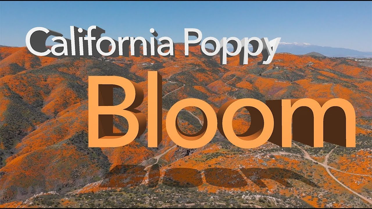 Image result for poppy in lake elsinore