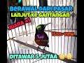 Jngan Diklik Daripada Burung Kolibri Ninja Anda Ikut Gacor Terbaru  Mp3 - Mp4 Download