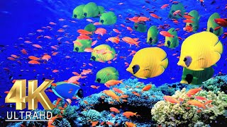 4K Aquarium for Relaxation  Water Sound Relax Meditation Music  4K UHD Screensaver.