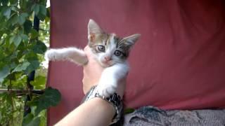 Кошечка трехцветная котенок Волжский сентябрь 2016