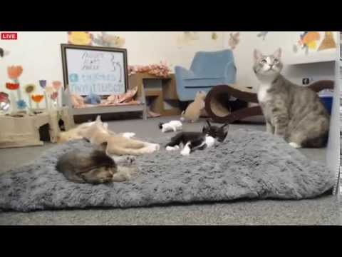 Tiny Kittens Otto escapes then kittens pass out Shelly discovers Otto and fixes it