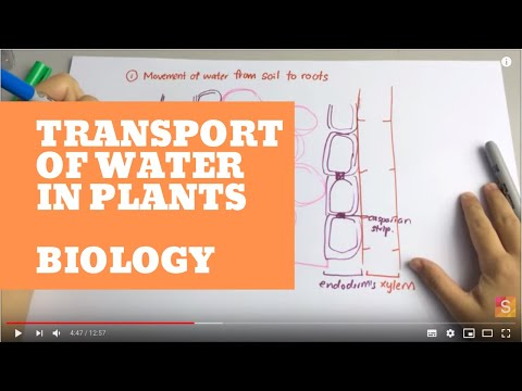 Biology- Transport of water in plant