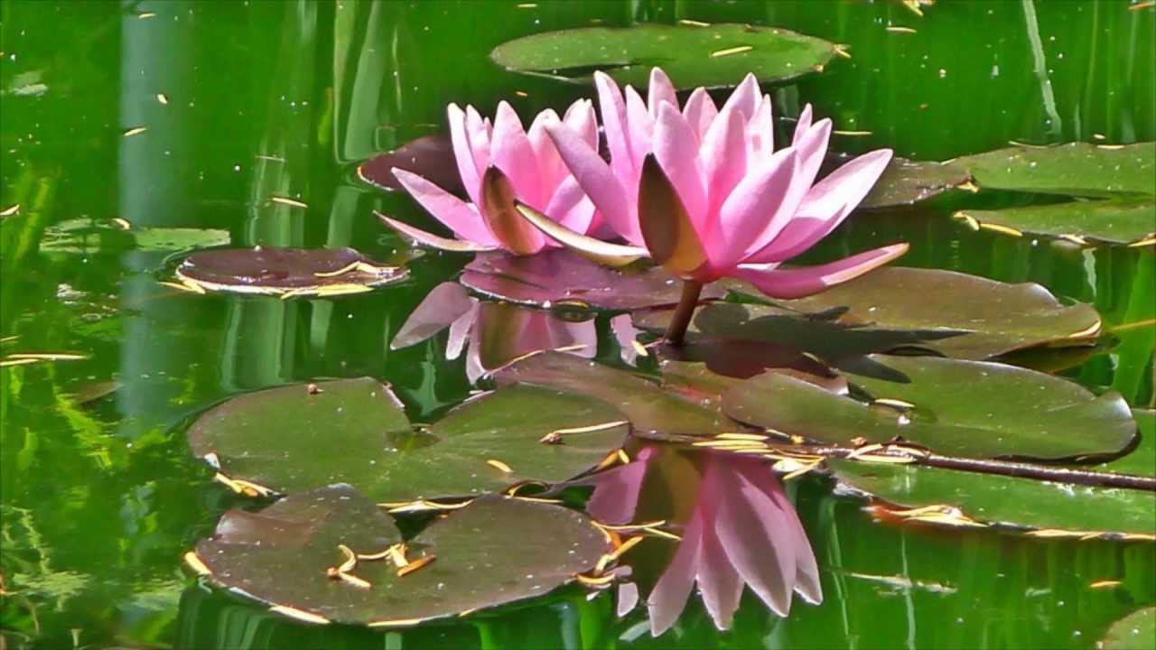Flower pooja with mantra youtube flower pooja with mantra mightylinksfo