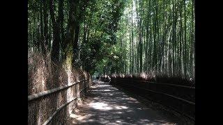 京都 嵐山の夏 渡月橋から竹林 ☆ Kyoto Arashiyama