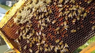 Biberon ile arı beslemek 11.02.2019