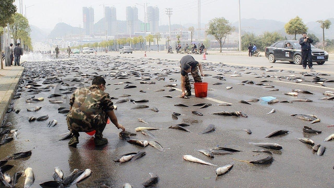 Fische Regnen