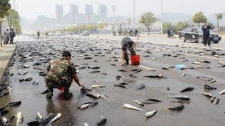 Fischregen!  Die unglaublichsten Arten von Regen auf unserem Planeten!