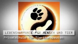 Hundeerziehung Ohne Gewalt Baden Württemberg Clickertraining Bw Lebensharmonie Für Mensch Und Tier