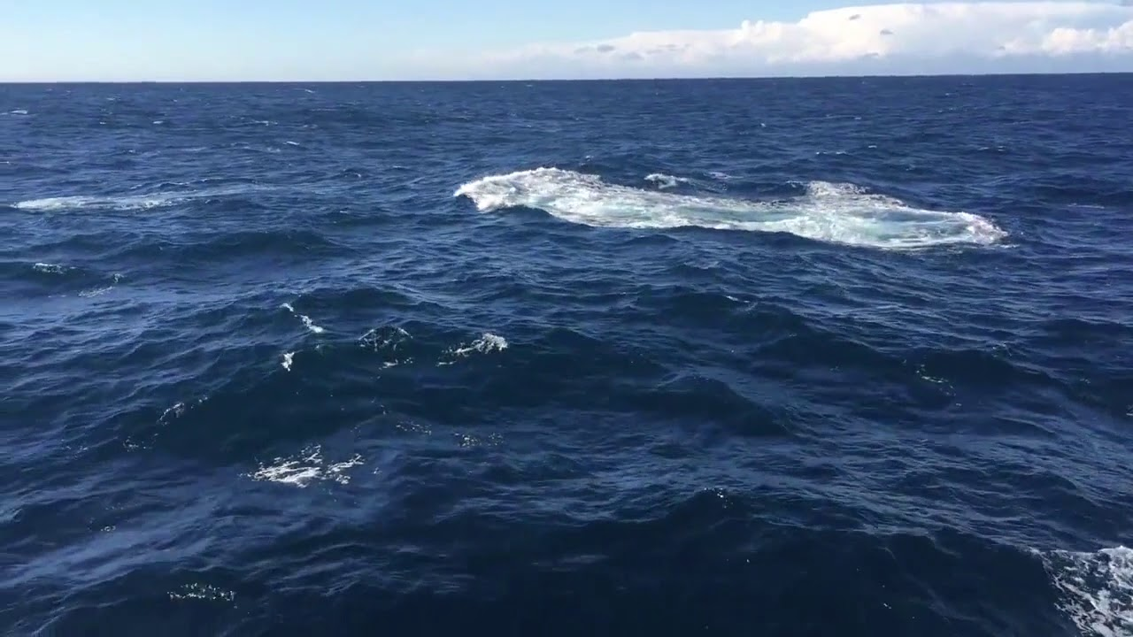 video Oz Whale Watching Mid Week BBQ Lunch Cruise