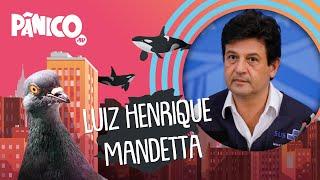 LUIZ HENRIQUE MANDETTA| PÂNICO - AO VIVO - 05/06/20