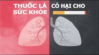 Không có loại thuốc lá nào an toàn cho sức khỏe