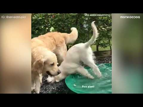 Funniest Dog Fail Compilation 2019 || Funny Pet Videos || Monkoodog