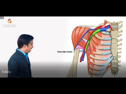 Axillary vein and its tributaries - Upper limb gross anatomy , Dr G Bhanu Prakash medical animation