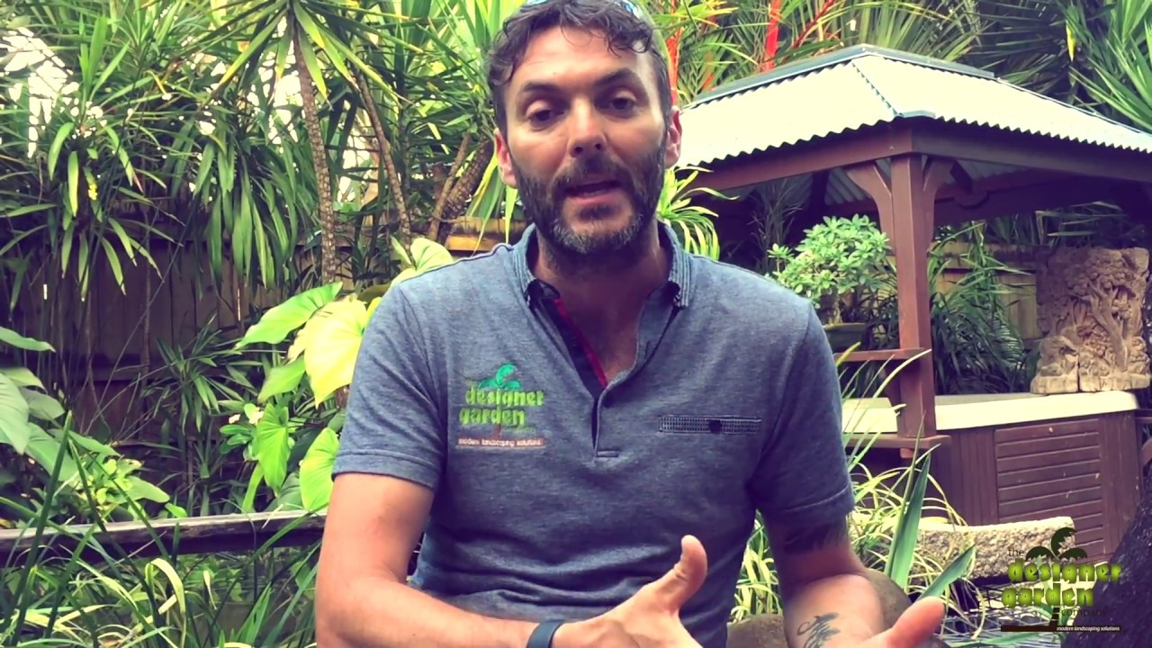 cairns landscaping how to plant and grow a tropical garden youtube