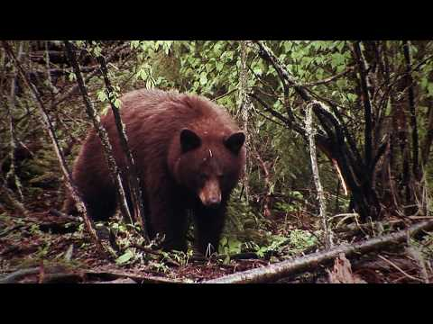 Moment Of Truth: Determining Bear Shot Placement