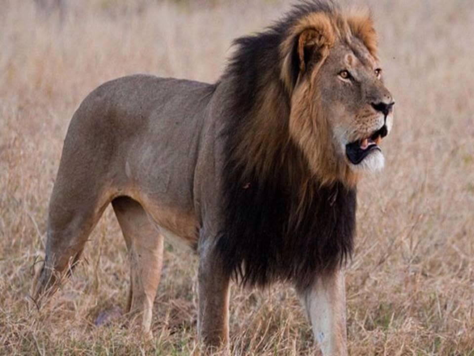 skinned-pornstar-named-lions-teen-movie