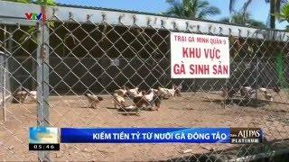 Bí quyết kiếm tiền tỷ từ nuôi gà Đông Tảo - Trại gà Đông Tảo Hữu Minh Q9 0908345456