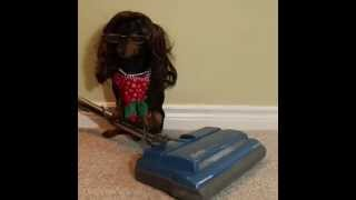 Mrs. Doubtfire Dog Vine - By Crusoe Dachshund