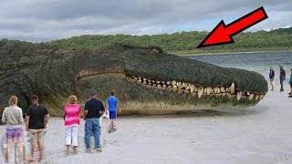 10 IMMORTAL Animals You Won't Believe Are Real