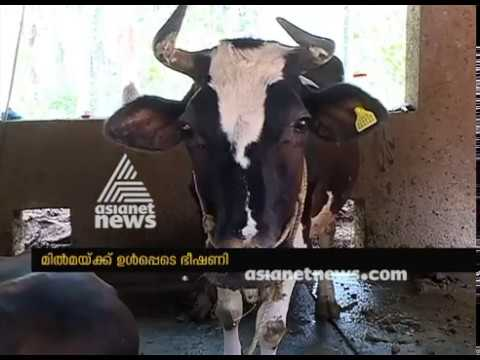 Dairy farmers to face trouble with RCP contract
